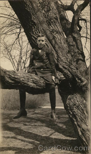 Boy Sitting in Tree South Effingham New Hampshire