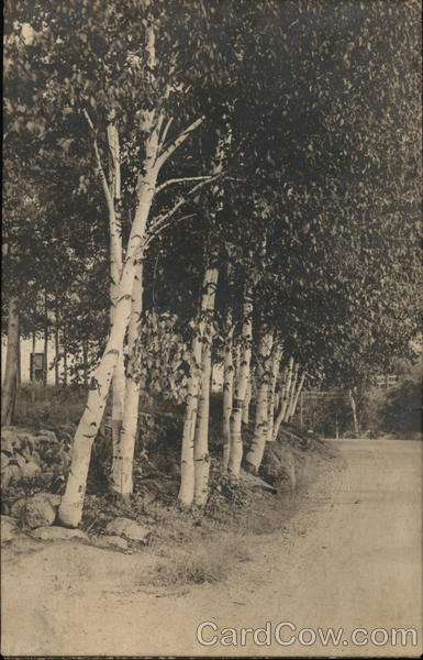 Birches by the Church, Pendexter Mansion Intervale New Hampshire