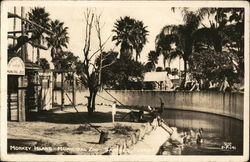 Monkey Island, Municipal Zoo Postcard