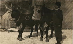 Melvin Nutter Home - Man with Oxen