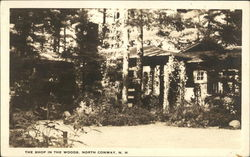 The Shop in the Woods Postcard