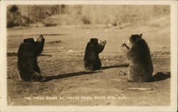 The Three Bears at Indian Head