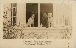 Dogs in Home's Window - The Prescotts'