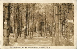 Grove near The Mt. Crescent House