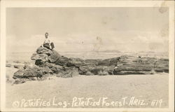 Petrified Log Postcard