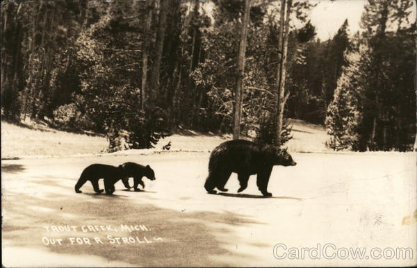 Black Bear With Two Cubs, Out For A Stroll Trout Creek Michigan