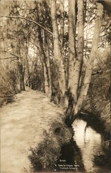 Path in Lithia Park