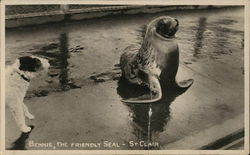 Bennie, The Friendly Seal - St. Clair