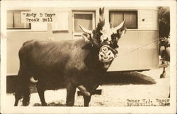 Andy D Day - Freak Bull Owner W.A. Rasor, Brookville, Ohio