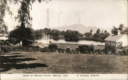 Head of Magog River Postcard