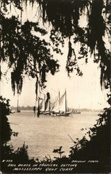 Sail Boats In Tropical Setting, Mississippi Gulf Coast
