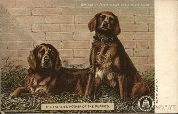 Bell-Cap-Sic Plasters Advertising Dogs