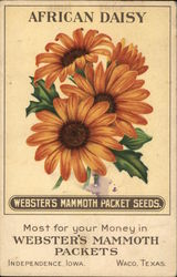 Webster's Mammoth Packet Seeds - African Daisy