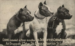 Dr. Woofter's Corn & Bunion Remedy Pitbulls
