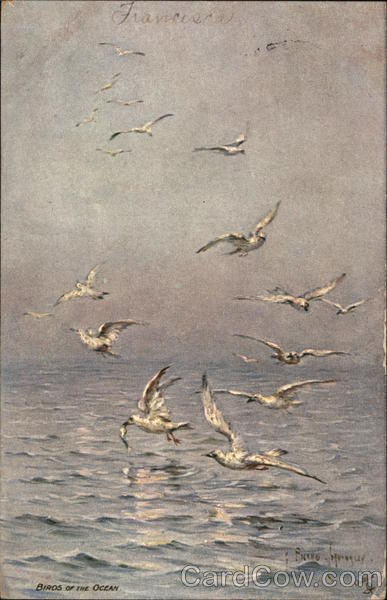 Seabirds flying over water