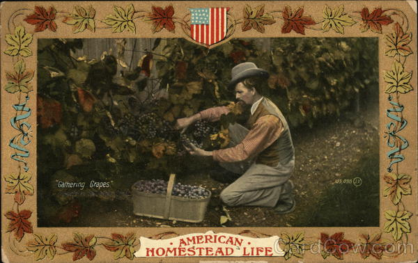 Gathering Grapes American homestead life Farming