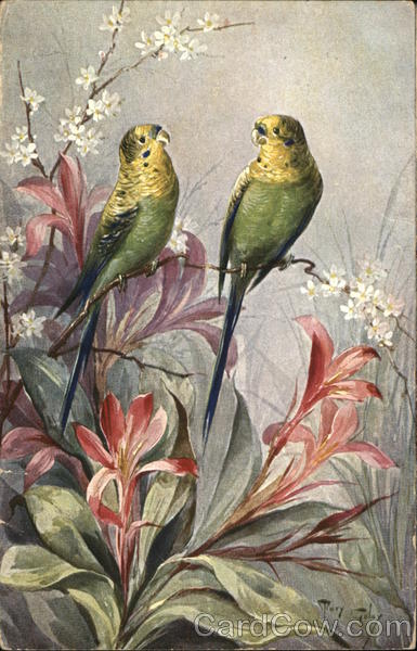 Two Parakeets Perched Atop Orange Lilies Tary Tolay