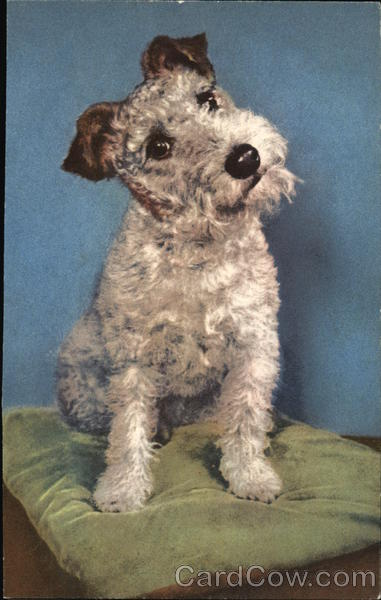 Foxterrier on a pillow Dogs