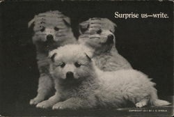 Surprise us - write. - white puppies