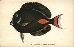 Black Fish with Orange Gill and Tail Side View