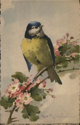 Yellow-Chested Bird with Blue Head Perched Upon Flowering Branch