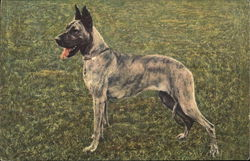 Great Dane Standing on Grass