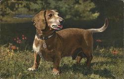Basset dachshund in grass