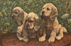 cocker spaniel puppies in a garden