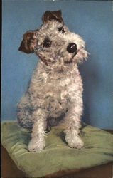 Foxterrier on a pillow