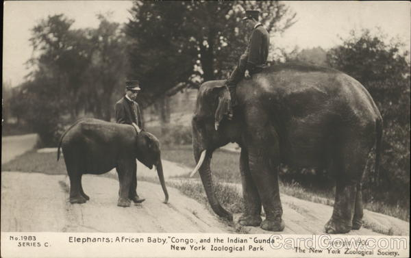 Elephants: African Baby Congo and the Indian Gunda Bronx New York