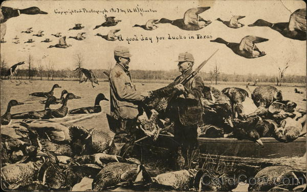 A Good Day for Ducks in Texas Hunting