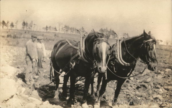 Plowing a Field with Horses Farming
