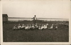 Man Posing with Geese