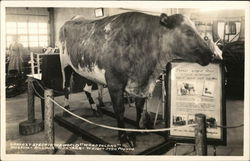 "Largest steer in the world ""Wonderland"" Museum"