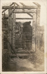 Black Bear in a Cage