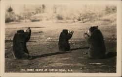 The Three Bears at Indian Head, NH