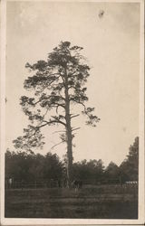 Horse at Base of Tall Pine Tree