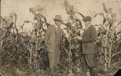Men in a Cornfield