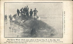 The Sperm Whale Which Came Ashore