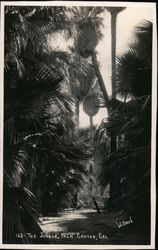 The Jungle, Palm Canyon, Cal. Postcard