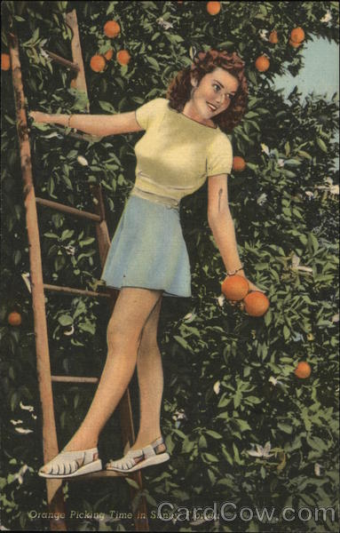 Orange Picking Time in Sunny Florida Swimsuits & Pinup
