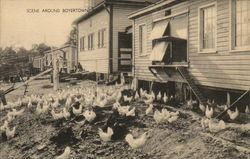 Scene Around Boyertown, PA of Chickens and Houses