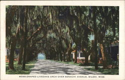 Moss-Draped Liveoaks Arch over Benachi Avenue