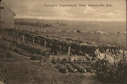 Dominion Experimental Farm