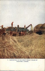 Harvesting In The Great Wheat Fields of Manitoba, Canada