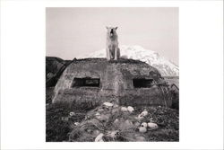 Large Marge's Dog, WWII Bunker and Fishing Nets, 1999