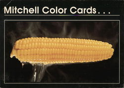 Mitchell Color Cards