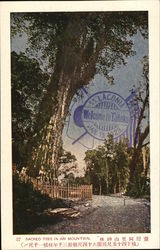 1923 Sacred Tree in Ari Mountain Postcard