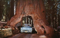 "Yosemite National Park - ""Wawona Drive-Through Tree"""