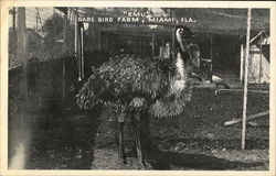 Rare Bird Farm - Emu